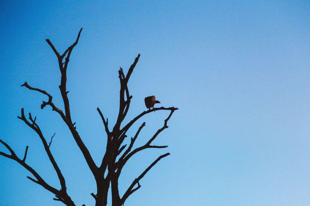 Sunrise Till Sunset - A 24 Hour South African Safari Diary (57)