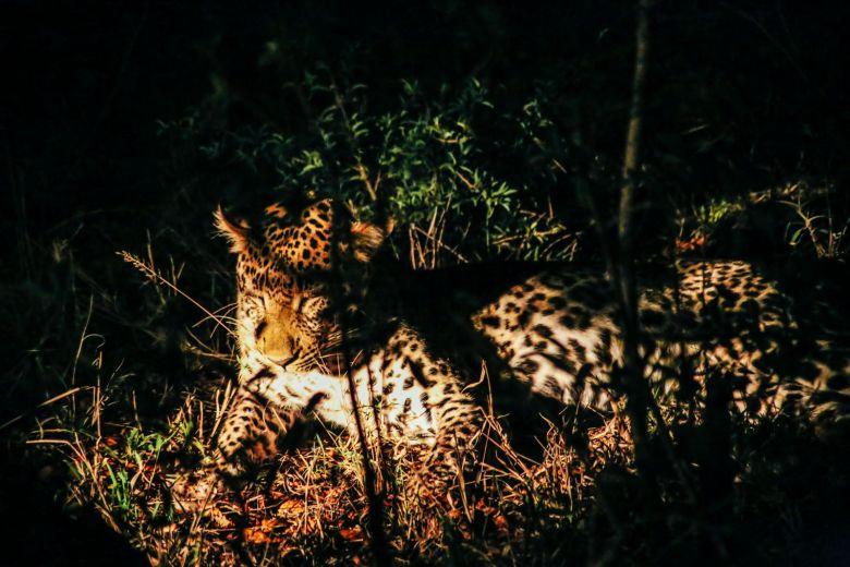 Sunrise Till Sunset - A 24 Hour South African Safari Diary (61)