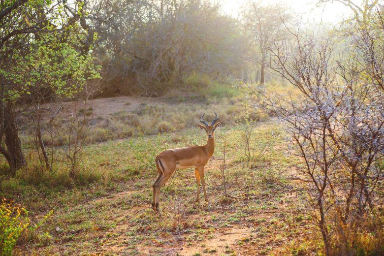 Jungle Love, South Africa (56)