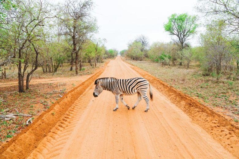 Jungle Love, South Africa (52)
