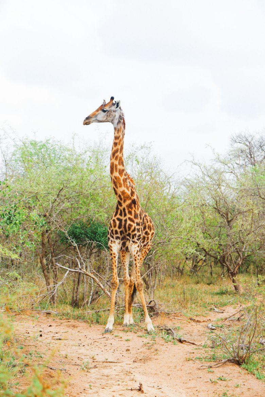 Jungle Love, South Africa (34)