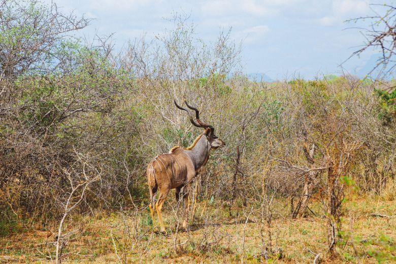 Jungle Love, South Africa (30)