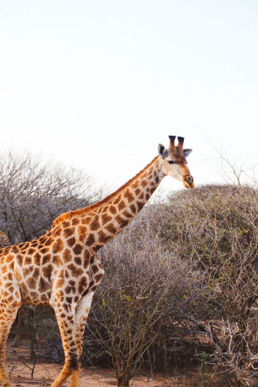 Jungle Love, South Africa (13)