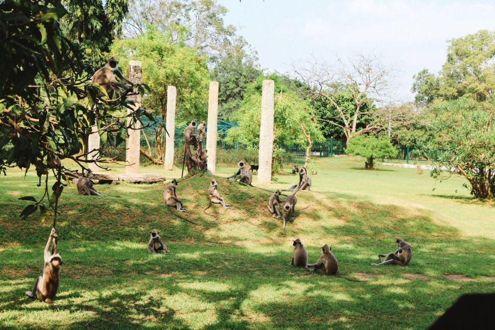 The First 24 Hours In Sri Lanka (39)