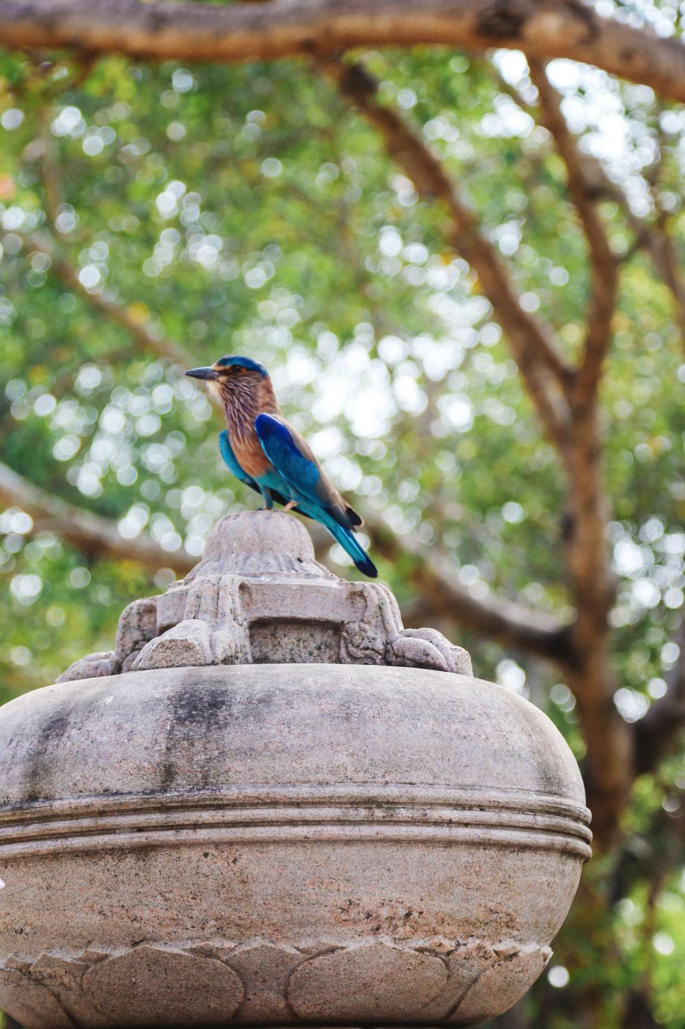 The First 24 Hours In Sri Lanka (53)