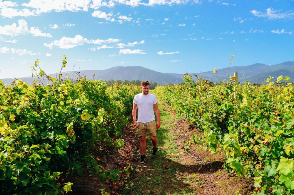 Ravines, Vineyards, Elephant Walking And The Most Spectacular Beach In South Africa's Eastern Cape (13)