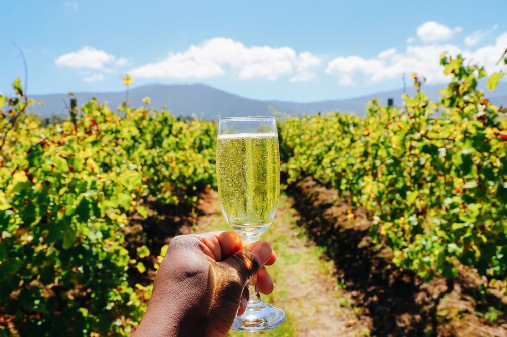 Eastern Cape Adventures In South Africa: Wines, 1,000 Year Old Trees And The Tallest Bungee In The World! (26)