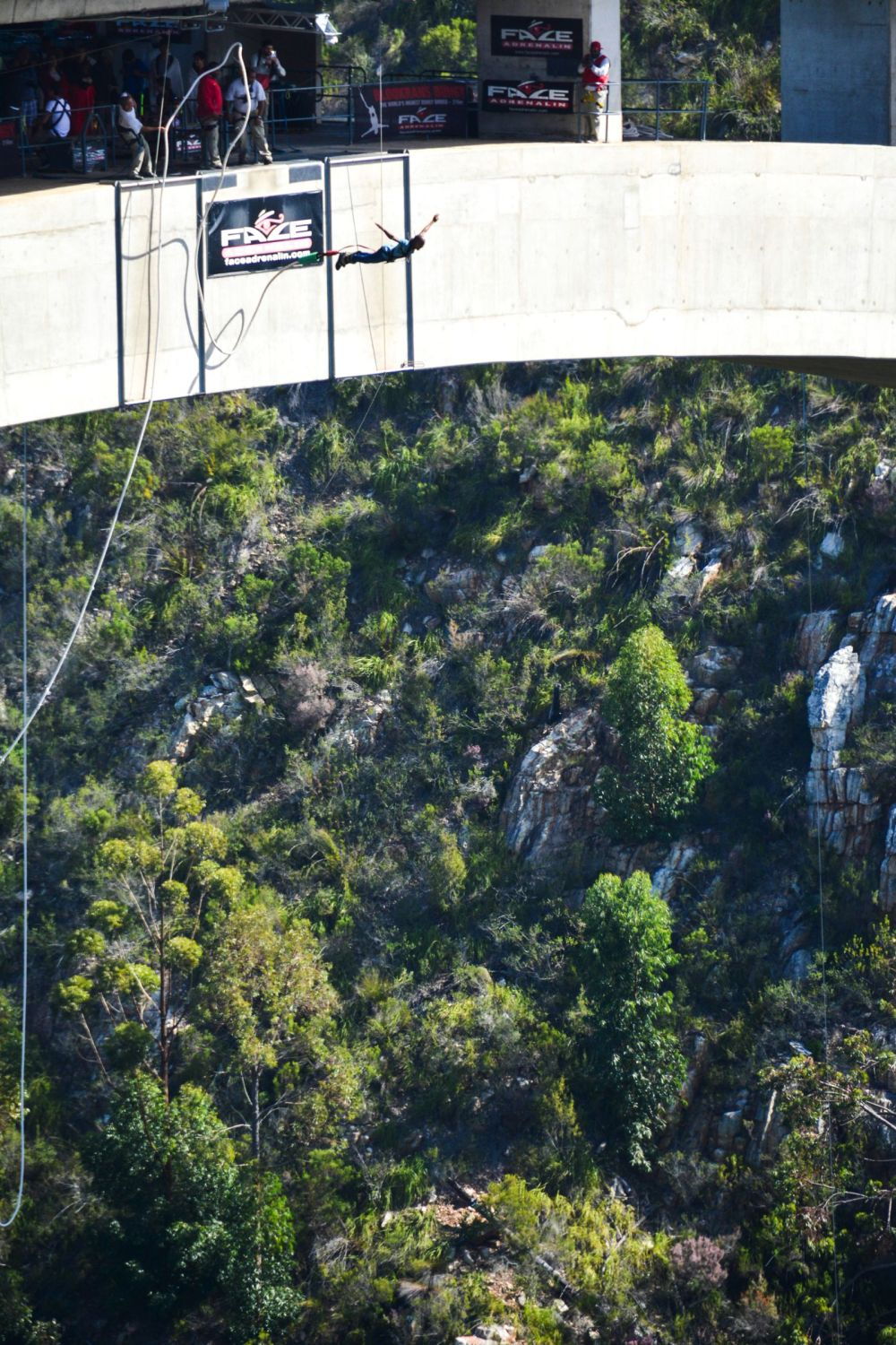Eastern Cape Adventures In South Africa: Wines, 1,000 Year Old Trees And The Tallest Bungee In The World! (4)