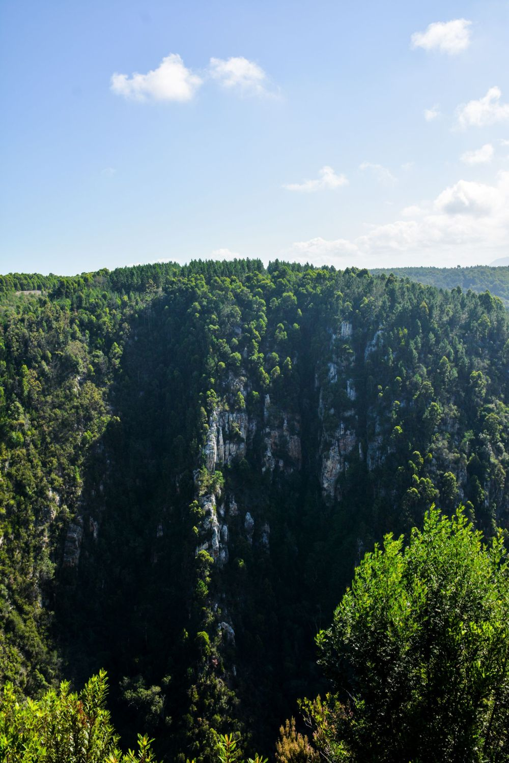 Eastern Cape Adventures In South Africa: Wines, 1,000 Year Old Trees And The Tallest Bungee In The World! (8)