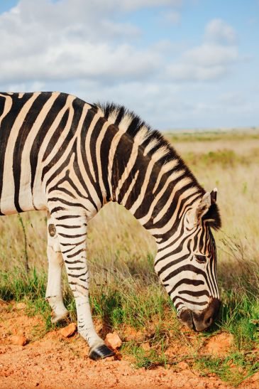 An Afternoon In Addo Elephant Park - A South African Must-Do! (5)