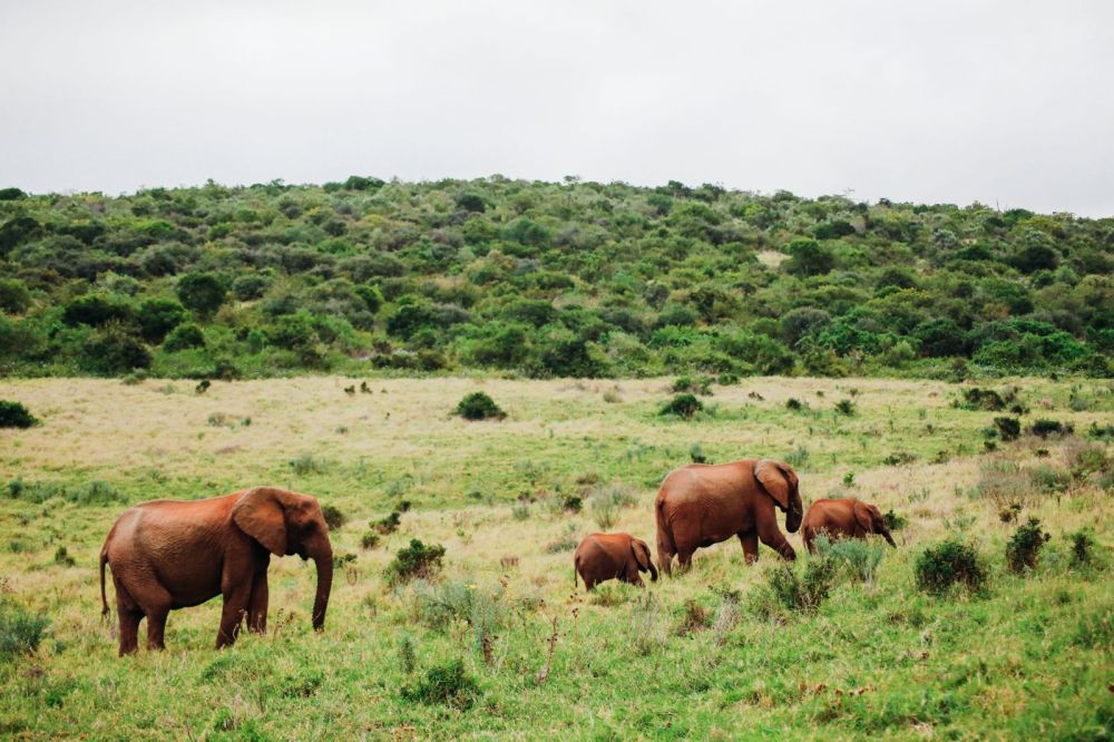 An Afternoon In Addo Elephant Park - A South African Must-Do! (35)