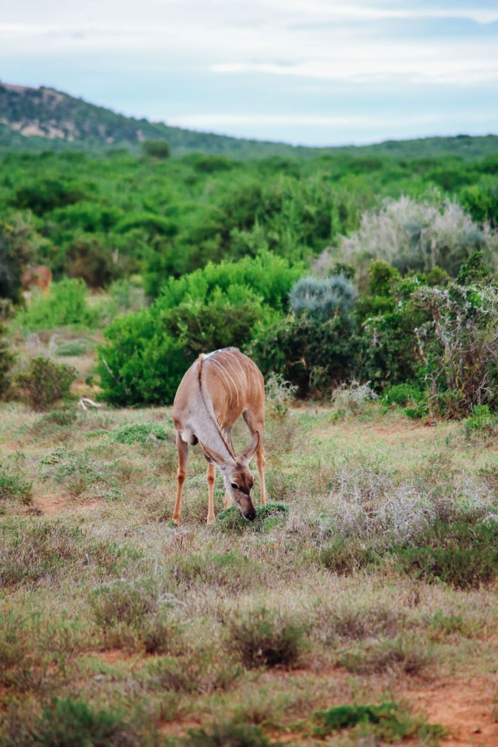 The Last 24 Hours In South Africa's Eastern Cape, Port Elizabeth, Addo National Park (18)