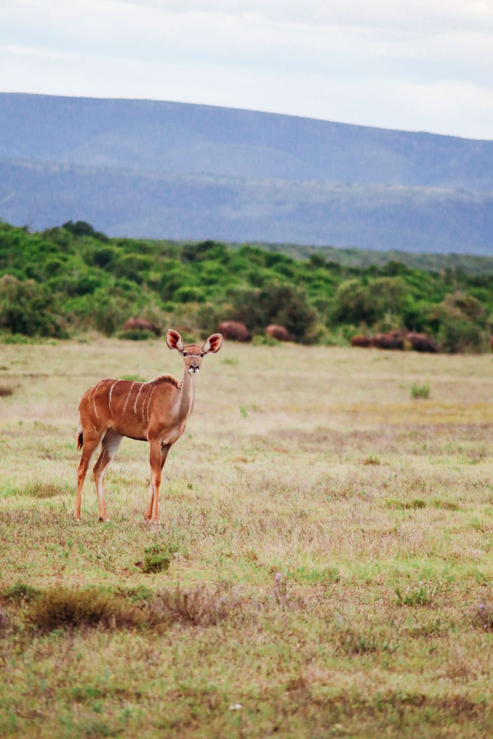The Last 24 Hours In South Africa's Eastern Cape, Port Elizabeth, Addo National Park (27)