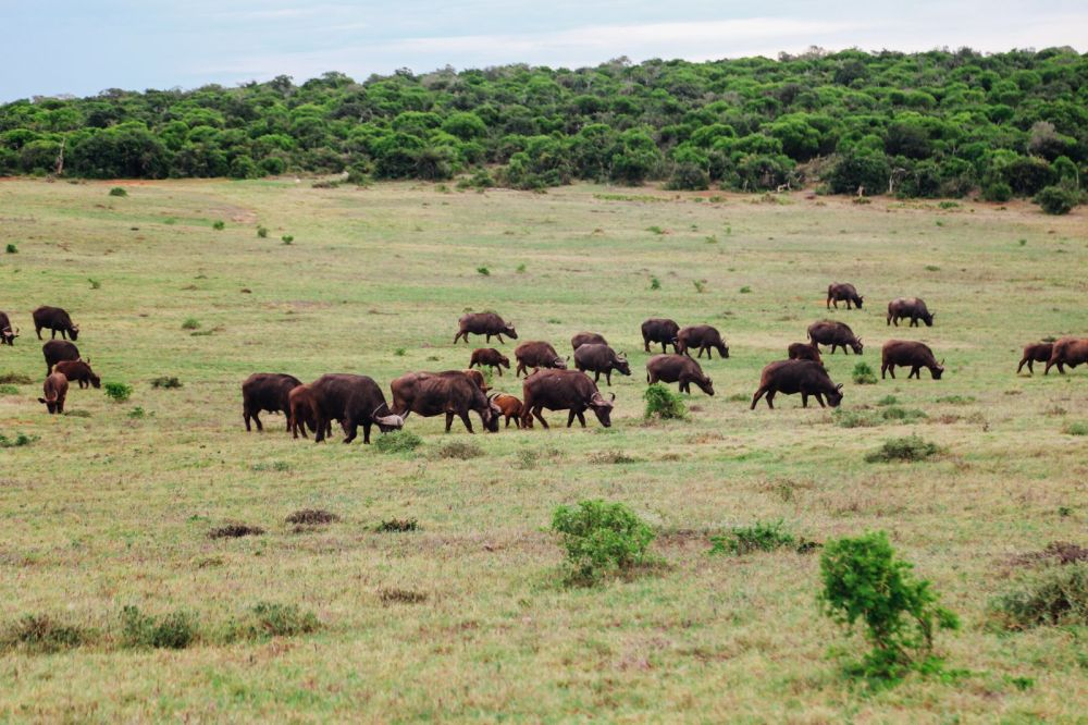 The Last 24 Hours In South Africa's Eastern Cape, Port Elizabeth, Addo National Park (33)
