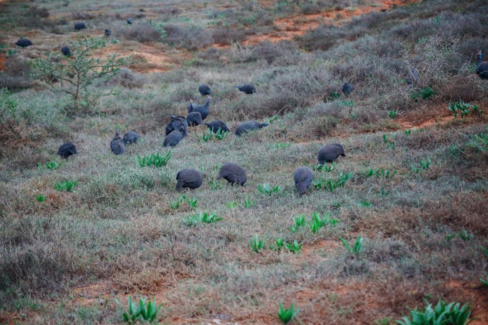 The Last 24 Hours In South Africa's Eastern Cape, Port Elizabeth, Addo National Park (38)