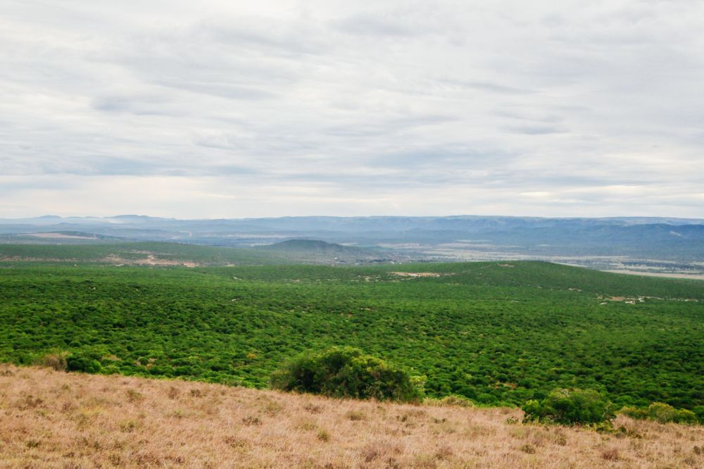 The Last 24 Hours In South Africa's Eastern Cape, Port Elizabeth, Addo National Park (40)