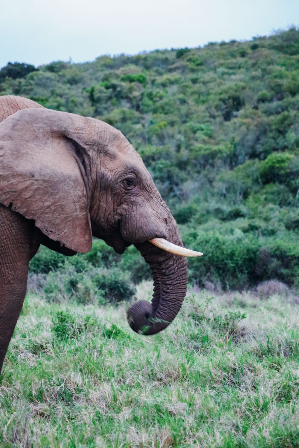 The Last 24 Hours In South Africa's Eastern Cape, Port Elizabeth, Addo National Park (49)