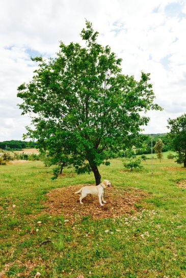 Truffle-Hunting, Chateau-Living And Wine-Tasting In the French Dordogne Valley (2)