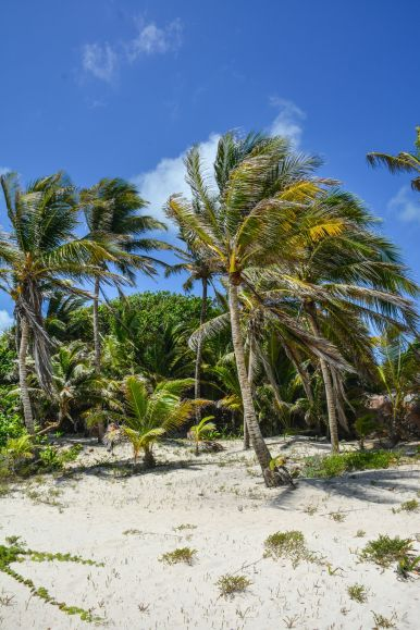 What Every Visitor Must Know About Visiting Tulum in Mexico (3)