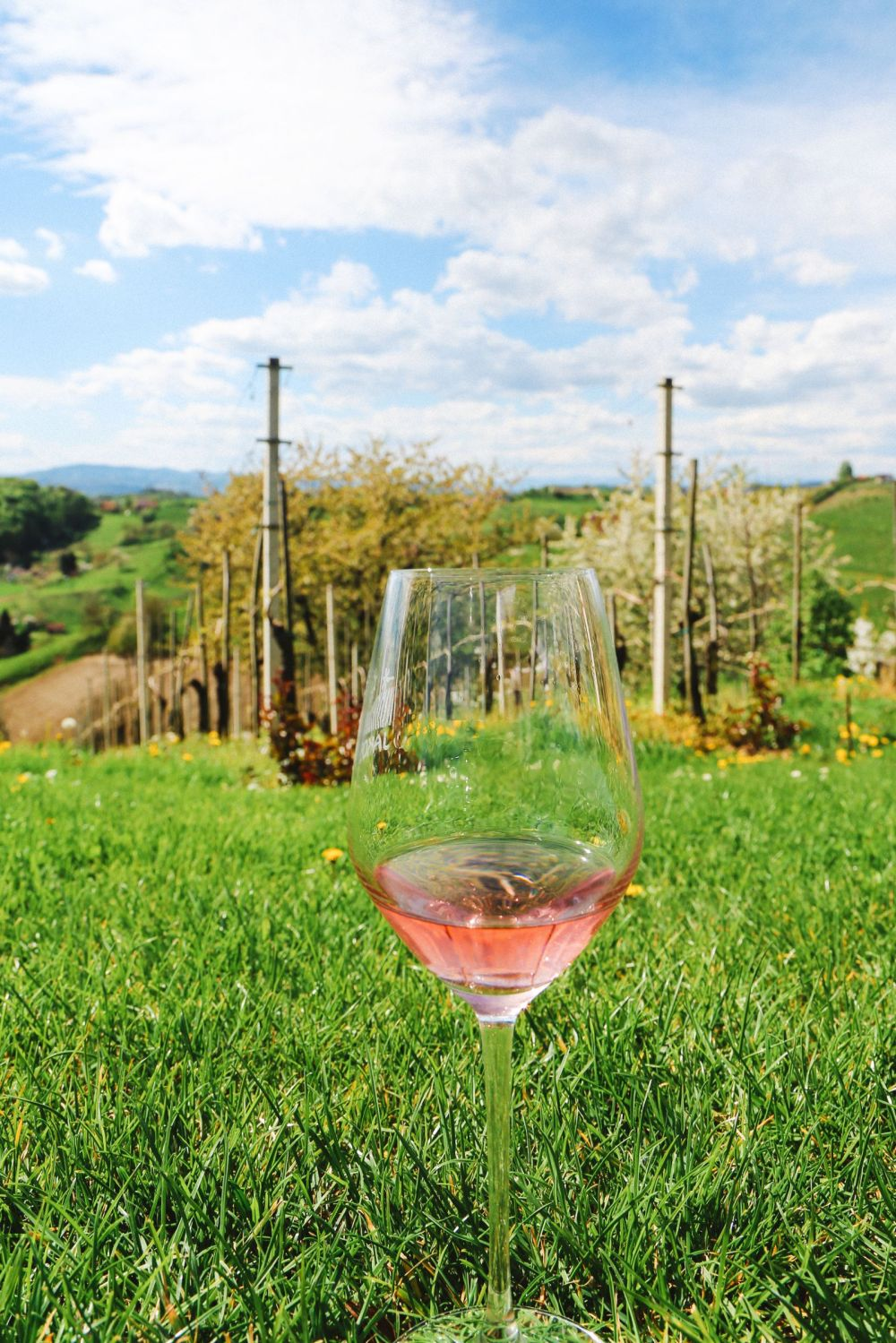 Vineyards, Charcuterie And The Old Historic City Of Maribor, Slovenia (4)