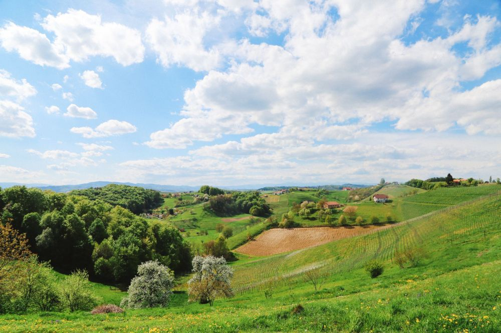 Vineyards, Charcuterie And The Old Historic City Of Maribor, Slovenia (7)