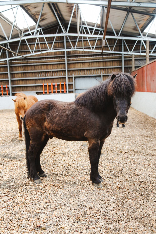 Horse Riding In The Faroe Islands... (43)