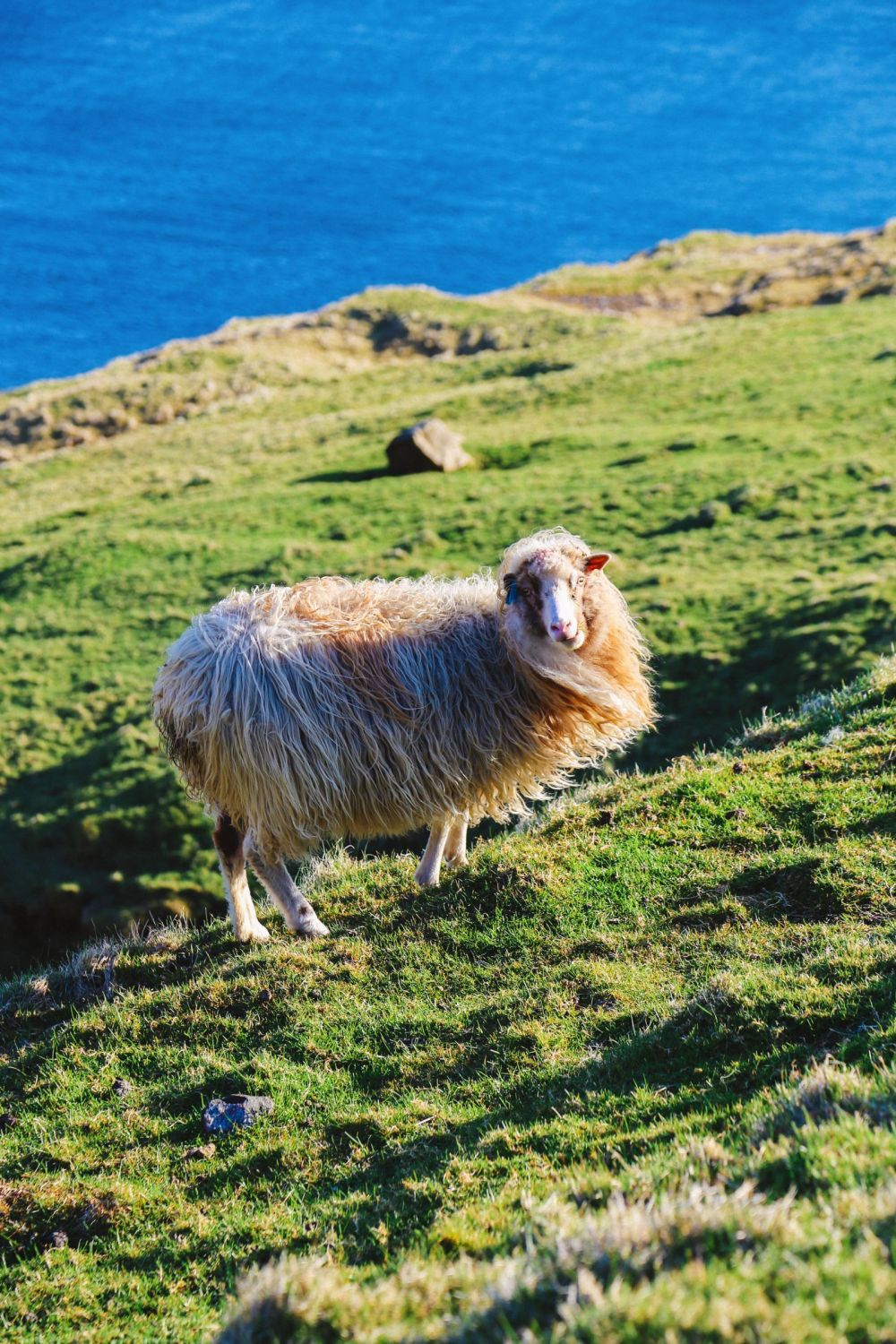 Our Final 24 Hours In The Faroe Islands... (39)