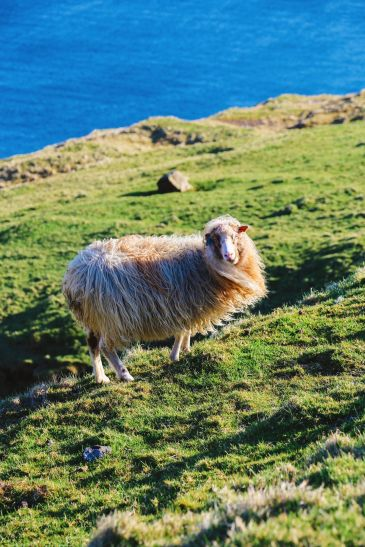 Our Final 24 Hours In The Faroe Islands... (39)