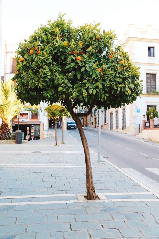 Toros And Ancient City Walks... In Ronda, Spain (29)