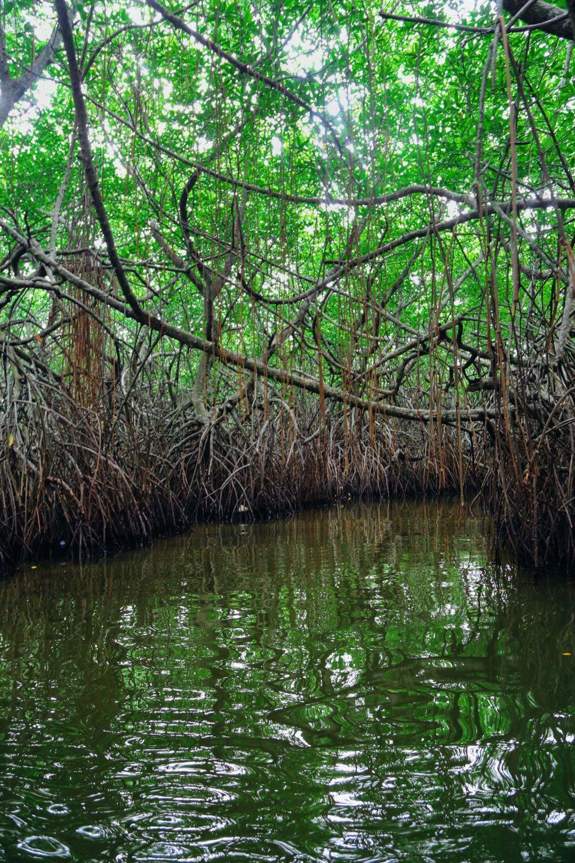 A Journey Down The Madu Ganga River, Sri Lanka (5)