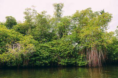 A Journey Down The Madu Ganga River, Sri Lanka (6)