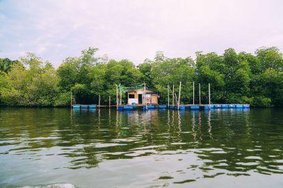 A Journey Down The Madu Ganga River, Sri Lanka (9)