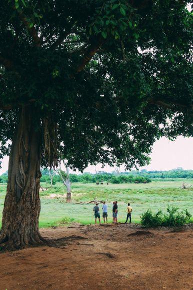 On Elephant Safari In Udawalawe, Sri Lanka (45)