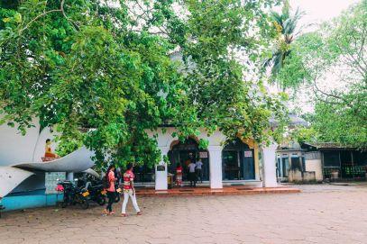 Exploring Beruwala And Bentota, Sri Lanka (18)