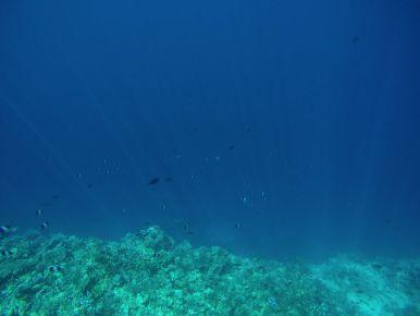 Reef Explorers... At the Angsana Velavaru Maldives (18)