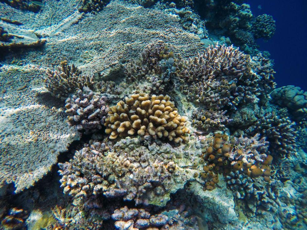 Reef Explorers... At the Angsana Velavaru Maldives (25)
