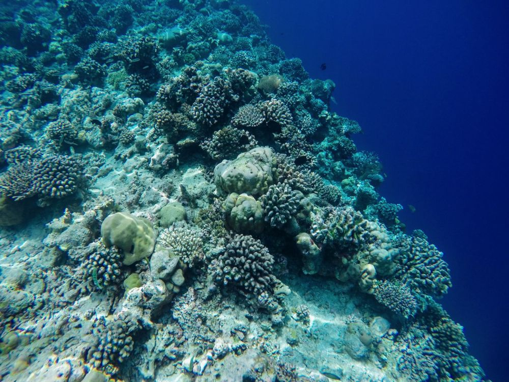 Reef Explorers... At the Angsana Velavaru Maldives (26)