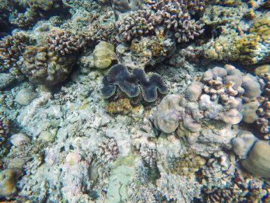 Reef Explorers... At the Angsana Velavaru Maldives (29)