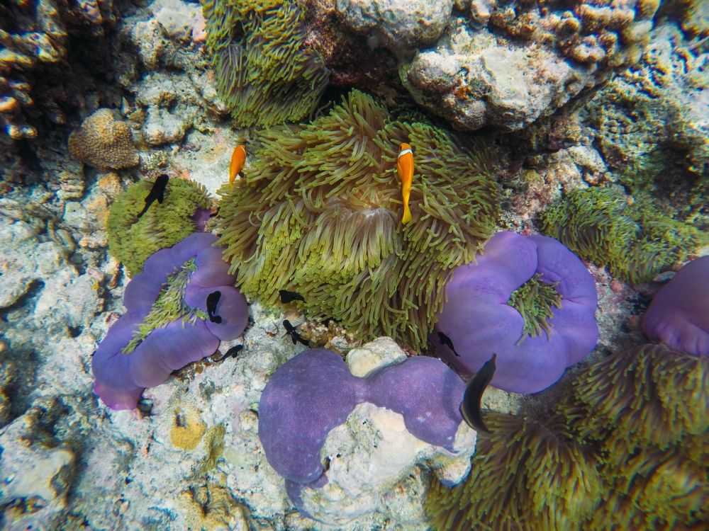 Reef Explorers... At the Angsana Velavaru Maldives (33)