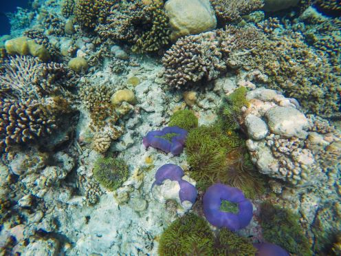 Reef Explorers... At the Angsana Velavaru Maldives (36)