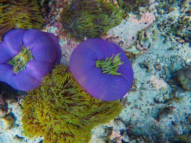 Reef Explorers... At the Angsana Velavaru Maldives (37)