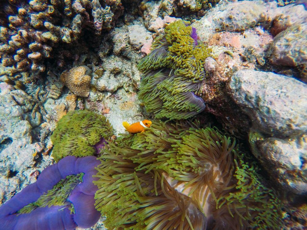 Reef Explorers... At the Angsana Velavaru Maldives (39)