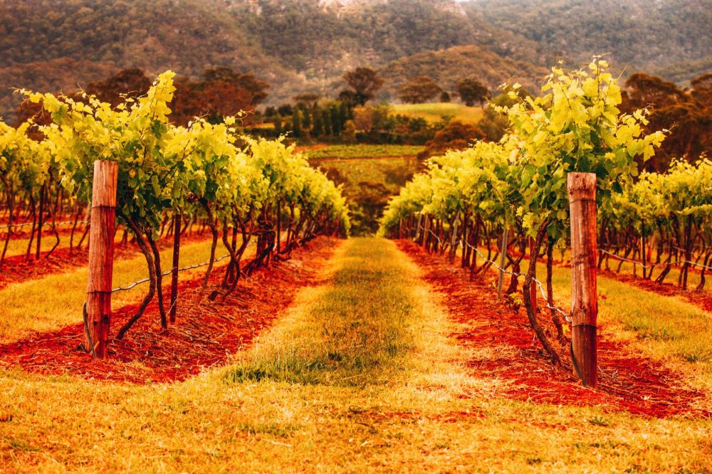10 Incredible Vineyards You Have To Visit In Australia (12)