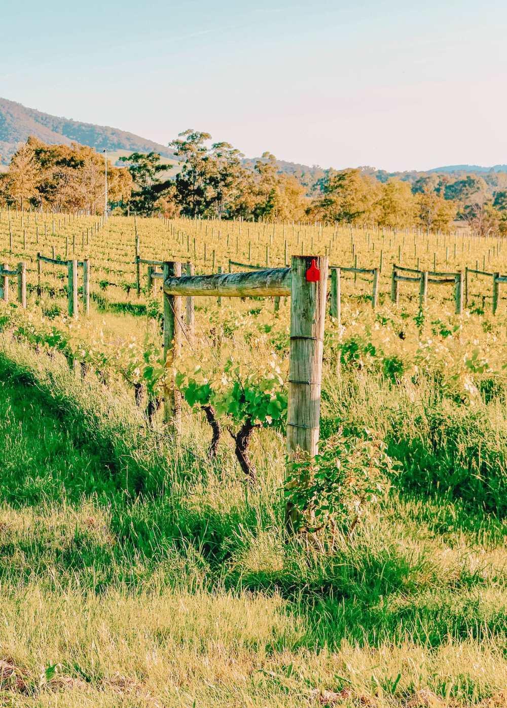 Best Vineyards In Australia (11)