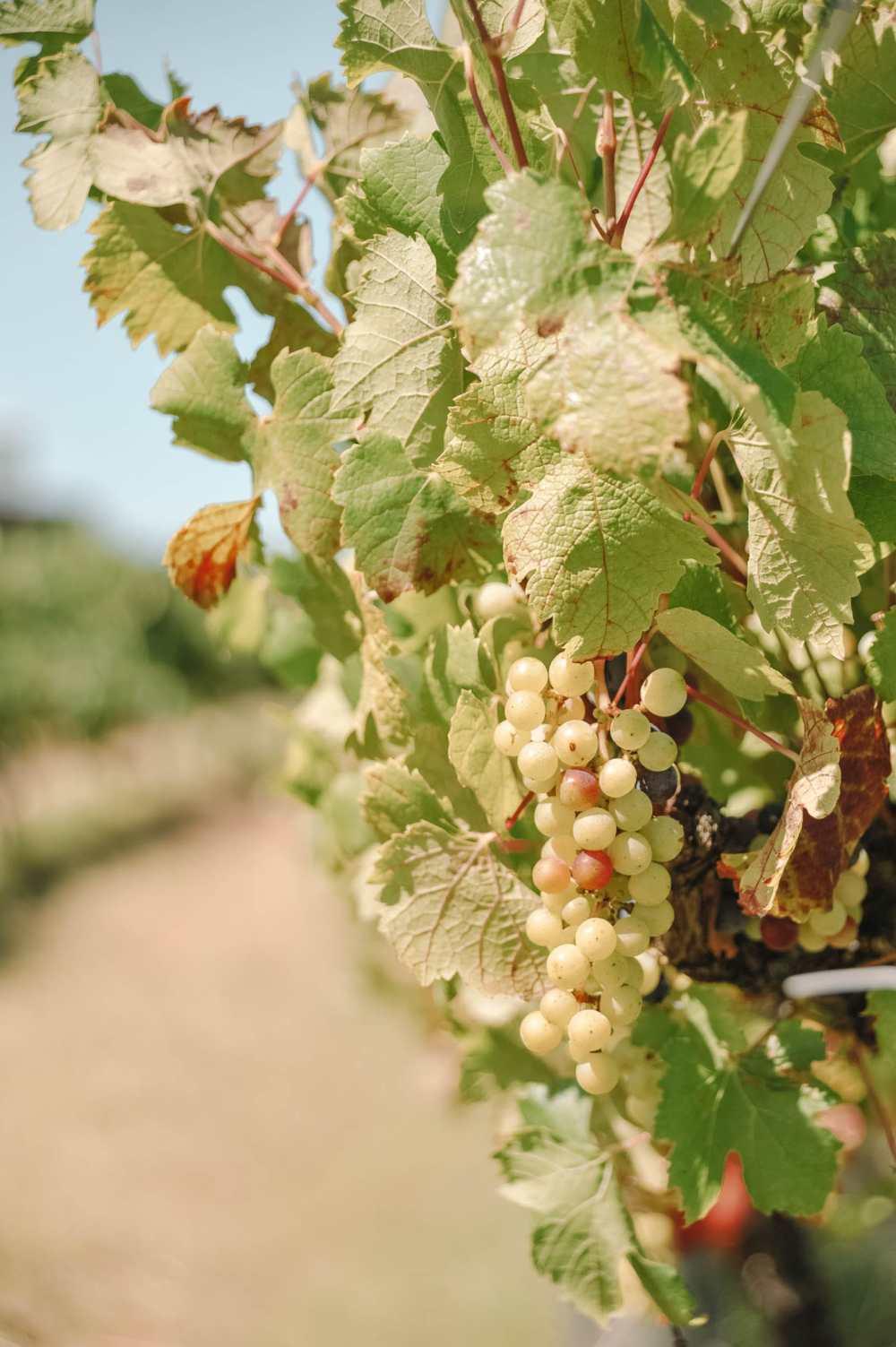 Best Vineyards In Australia (4)