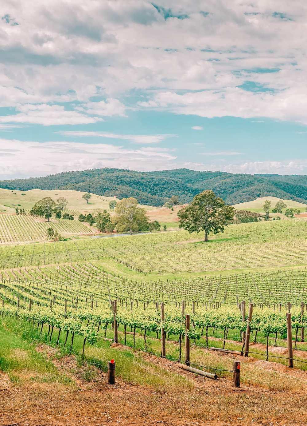 Best Vineyards In Australia (13)