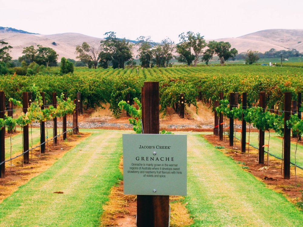10 Incredible Vineyards You Have To Visit In Australia (8)