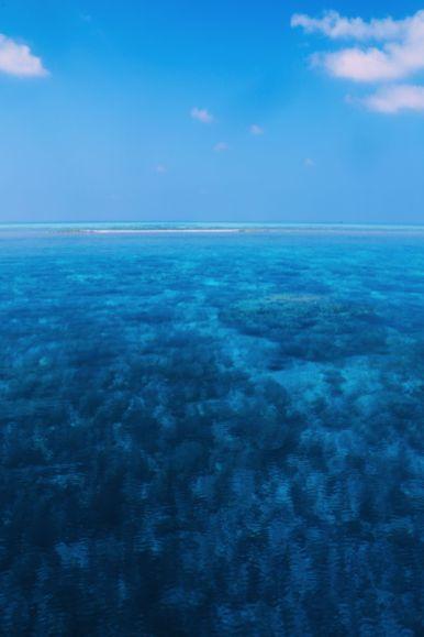 Maafushivaru, Birthing Dolphins And Swimming With Manta Rays... In The Maldives (70)