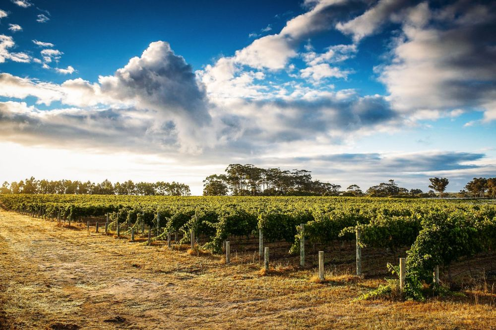 10 Incredible Vineyards You Have To Visit In Australia (2)