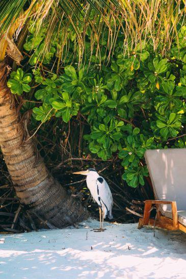 Sunshine and Island Hues... At Velassaru Maldives (38)